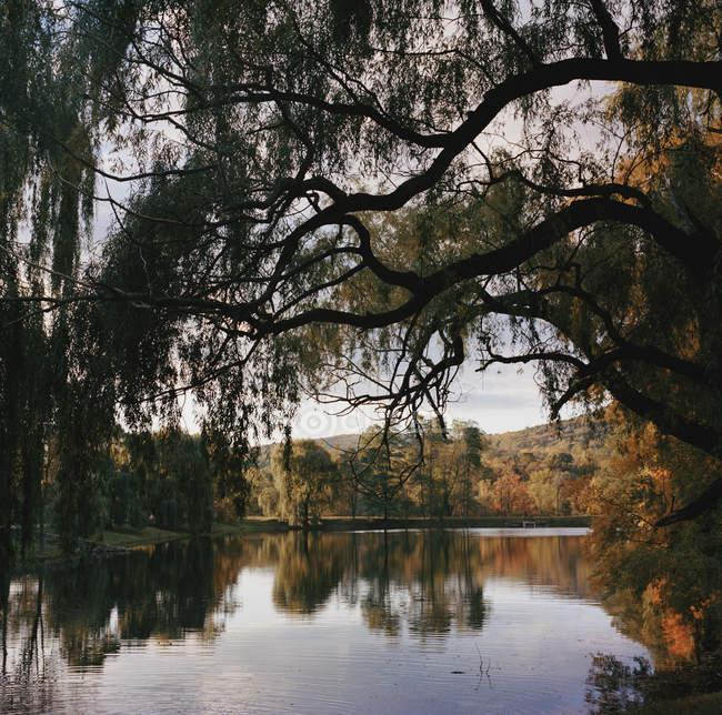 Осенние деревья над водой озеро — стоковое фото