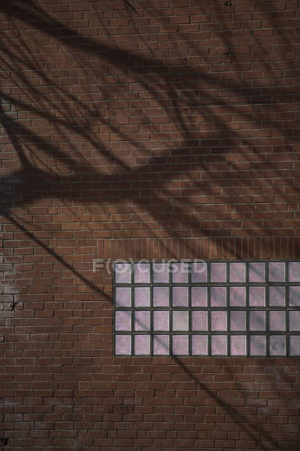 Glass bricks in wall with tree shaped shadow — Stock Photo
