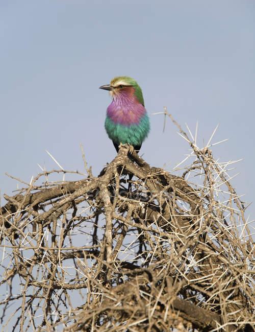 Птица усаживаться на пышные ветви над голубое небо — стоковое фото