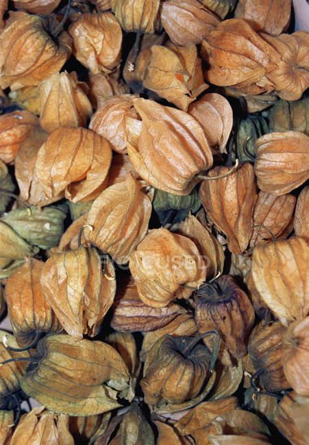 Full frame shot of Physalis fruit — Stock Photo