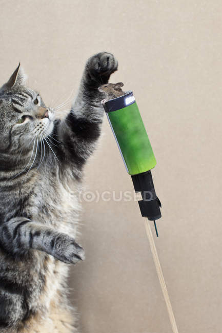 Cat prepares mouse for rocket launch — Stock Photo