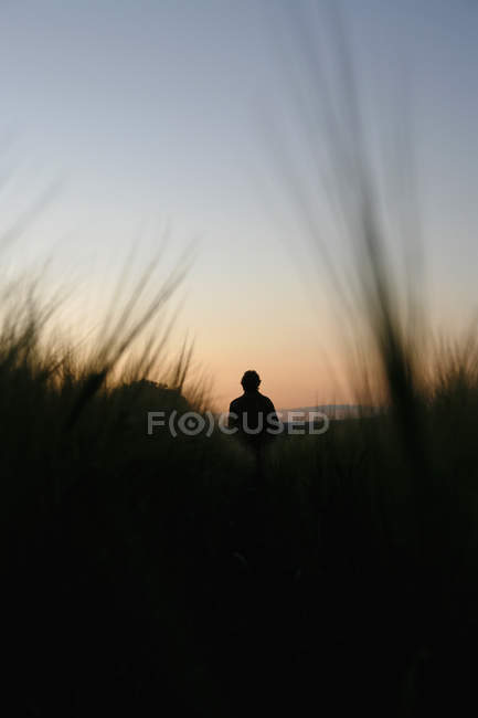 Rear view of person watching sunset in field of rye — Stock Photo