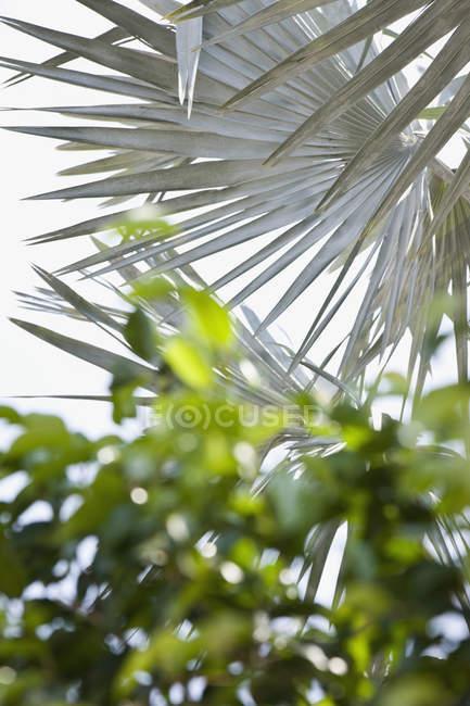 Затемненный снимок различных листьев на фоне неба — стоковое фото