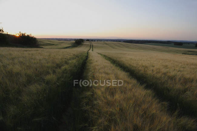 Tracks through field landscape at sunset — Stock Photo