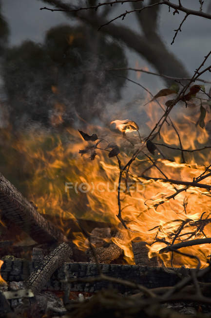 Close up view of forest fire flame — Stock Photo