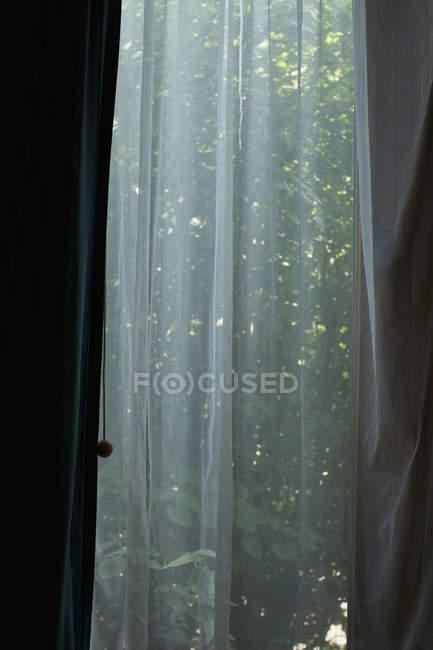 Feuillage vert vu derrière un rideau transparent — Photo de stock