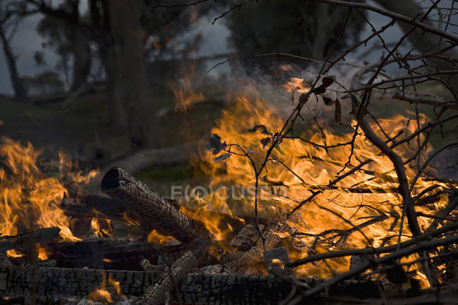 Close up view of forest fire flame and smoke — Stock Photo