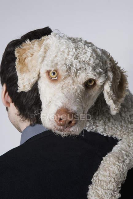 Портрет собаки, смотрящей в камеру с мужского плеча — стоковое фото