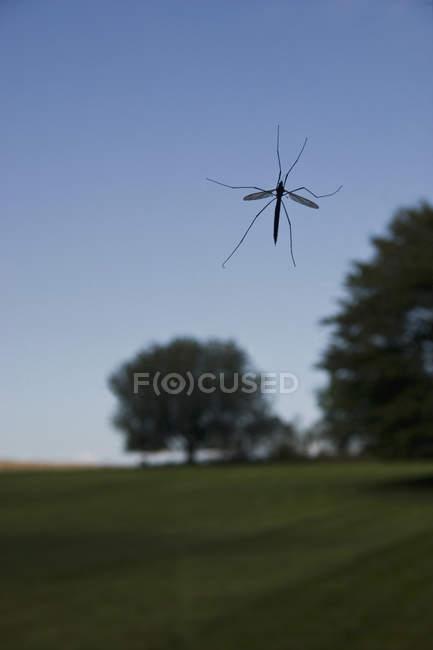 Nahaufnahme von Insekten am Fenster — Stockfoto