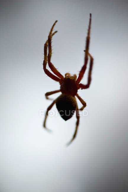 Pequena aranha paira sobre fundo branco — Fotografia de Stock
