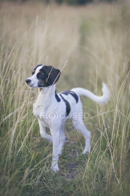 Alert dog standing amidst grass field and looking away — Stock Photo