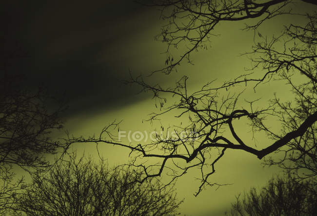 Leafless tree branches against night sky — Stock Photo