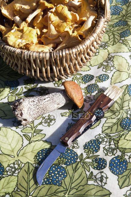 Cogumelo da floresta na mesa por cesta e faca — Fotografia de Stock