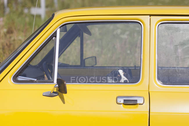 Cão sentado no carro amarelo e olhando para a câmera — Fotografia de Stock