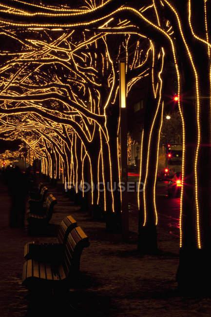 Arbres décorés avec des lumières à la ruelle de parc de ville pendant la nuit — Photo de stock