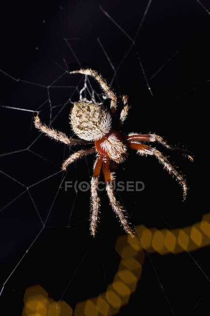 Close up view of spider in web at night — Stock Photo