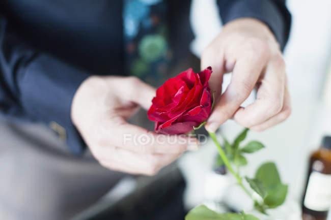 Colheita mãos masculinas segurando rosa vermelha — Fotografia de Stock
