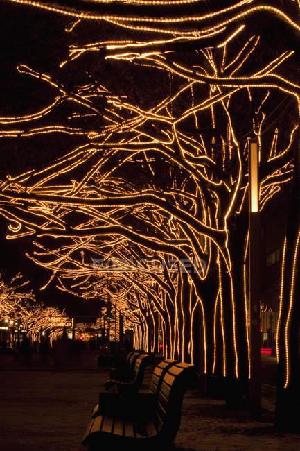 Árboles adornados con luces en el callejón del parque de la ciudad en la noche - foto de stock