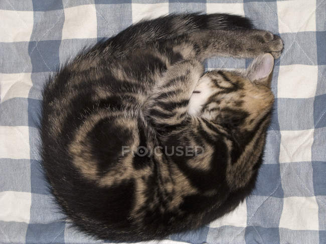 Directly above view of sleeping cat on checkered cloth — Stock Photo