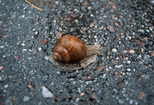 Close up view of snail on wet asphalt — Stock Photo