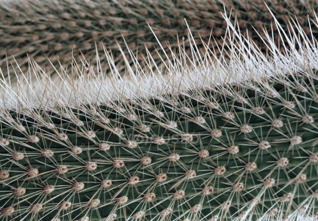 Полный кадр выстрел Кактус шипов — стоковое фото
