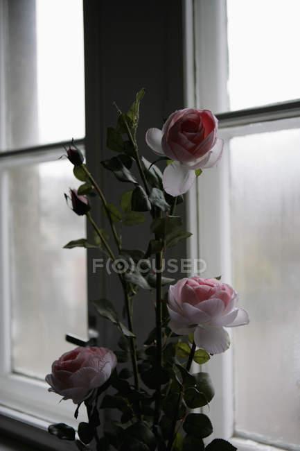 Rosas frescas ao lado da janela — Fotografia de Stock