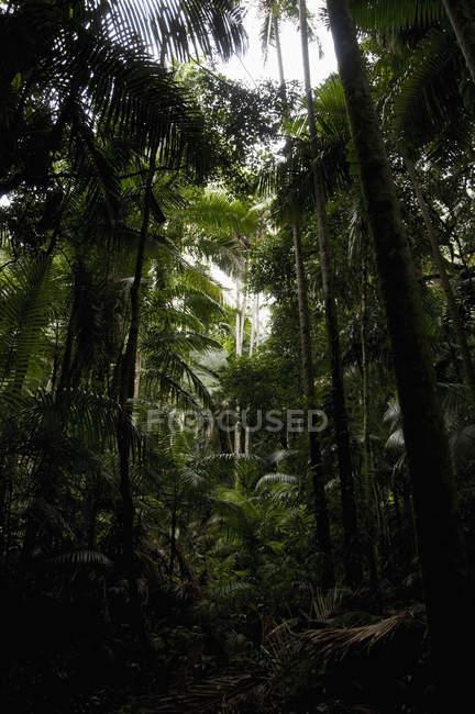 Vista de ángulo bajo de troncos de árboles en el bosque lluvioso - foto de stock