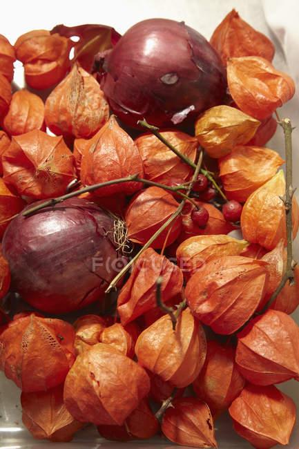 Tiro de quadro completo de vermelho alkekengis cebolas e Physalis — Fotografia de Stock