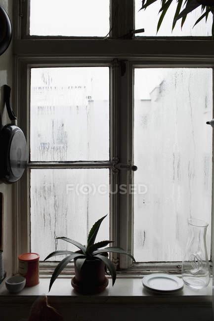 Küchenfenster mit eingetopfter Aloe auf der Fensterbank — Stockfoto