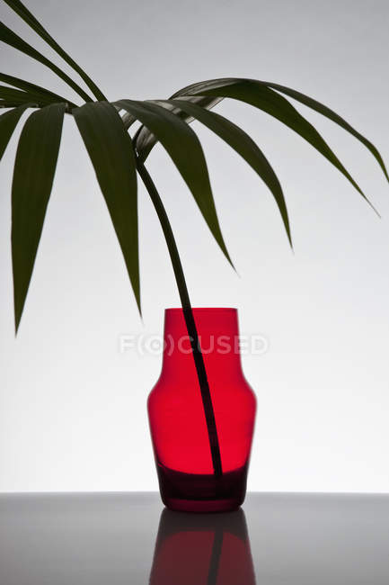 A frond from bella palm in red vase over white — Stock Photo