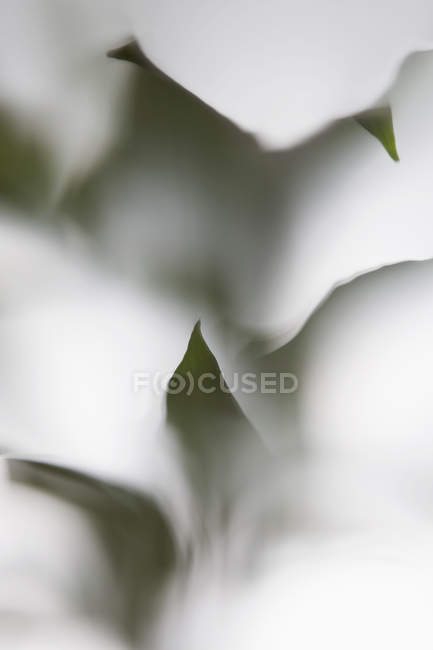 Leaves behind frosted glass — Stock Photo