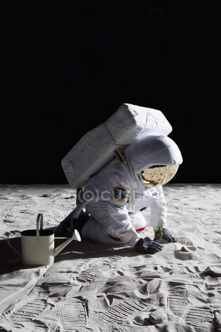 Astronauta jardinagem na superfície da lua — Fotografia de Stock