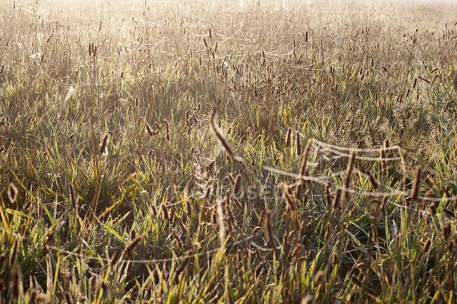 Поле с паутиной по всей траве, освещенной солнцем — стоковое фото