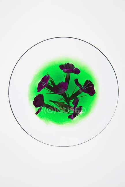 Directamente encima del plano de flores en líquido verde sobre fondo blanco - foto de stock