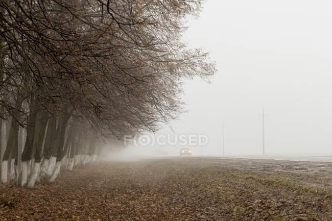 Carro enevoado, movendo-se na estrada por árvores nuas no nevoeiro — Fotografia de Stock