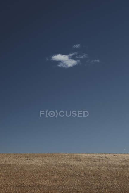 Idyllische Roggenfeld gegen den tiefblauen Himmel mit einsame Wolke — Stockfoto