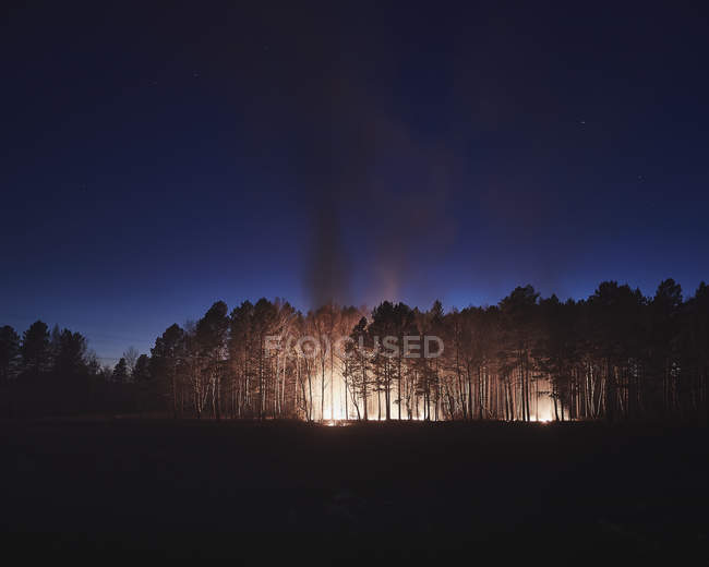 Distant view of trees burning in forest at night — Stock Photo