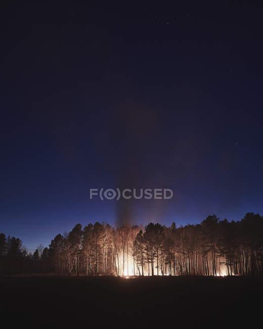 Alberi che bruciano nella foresta contro il cielo notturno — Foto stock