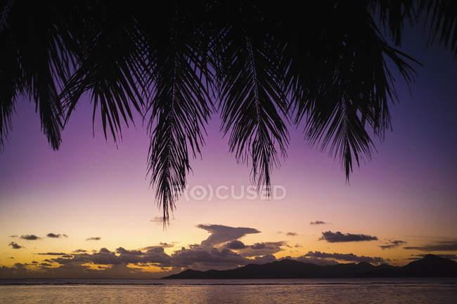 Vue panoramique sur palm laisse contre paysage coucher de soleil — Photo de stock