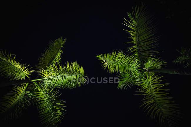 Vista inferiore di palme illuminate contro il cielo di notte — Foto stock