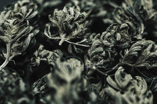 Close up shot of dried marijuana buds and leaves — Stock Photo