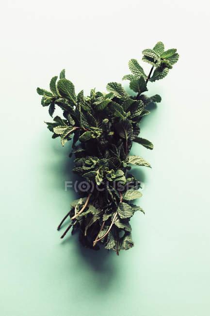 Directamente por encima de menta hojas de mesa turquesa - foto de stock