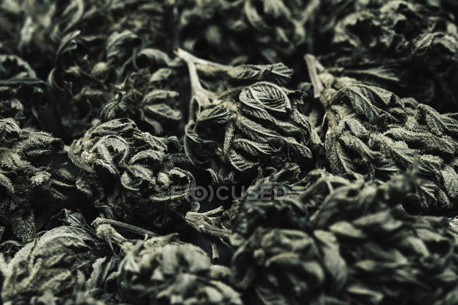 Full frame shot of dried marijuana buds and leaves — Stock Photo
