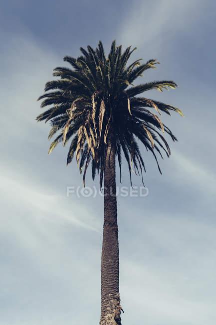Низкий угол обзора пальмы против облачного неба — стоковое фото