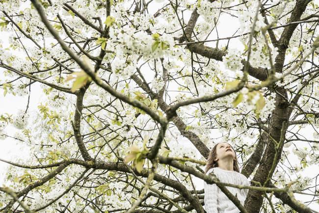 Menina escalada macieira flor de primavera — Fotografia de Stock