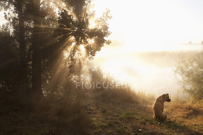 Dog sitting at tranquil sunrise lakeside — Stock Photo