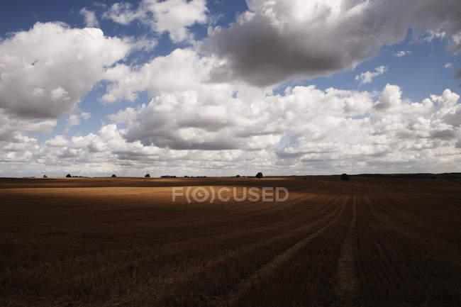 Idyllische wolken über landwirtschaftlicher ernte, wiendorf, mecklenburg-vorpommern, deutschland — Stockfoto