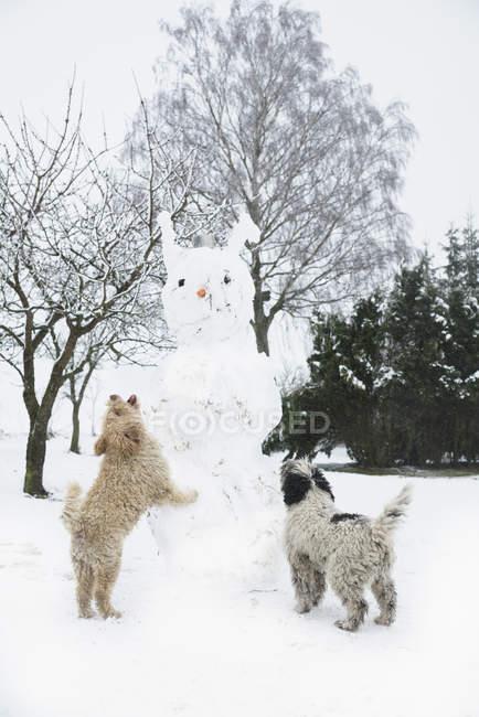 Perros juguetones saltando sobre muñeco de nieve - foto de stock
