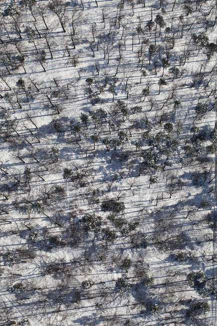 Aerial view snowy forest of trees — Stock Photo