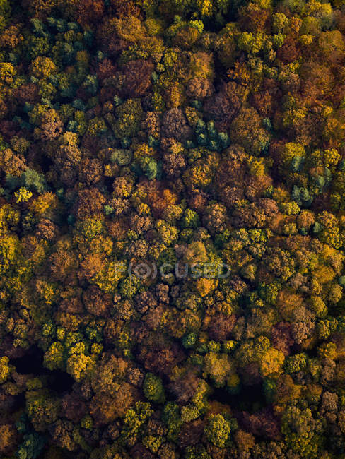 View from above autumn treetops — Stock Photo